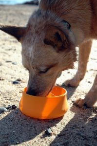 Portable bowls are perfect for keeping your pets hydrated while away from home. Silicone 'squishy bowl' available at Wilderness Supply