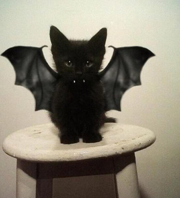 , Adorable Pet Costumes