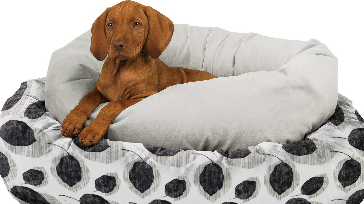 , 10 Must-Have Pet Products for Your Dog