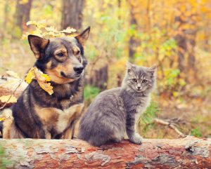 , 5 Tips to Keep Your Pet in Top Shape