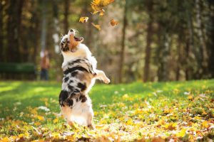 , Discover Fun Ways to Keep Your Pet Active this Fall