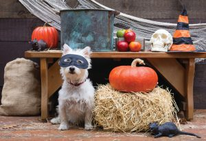 ", How to Throw the ""Paw-fect"" Halloween Party"