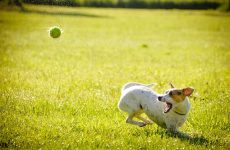 , 10 Fun Activities You Can Do With Your Dog