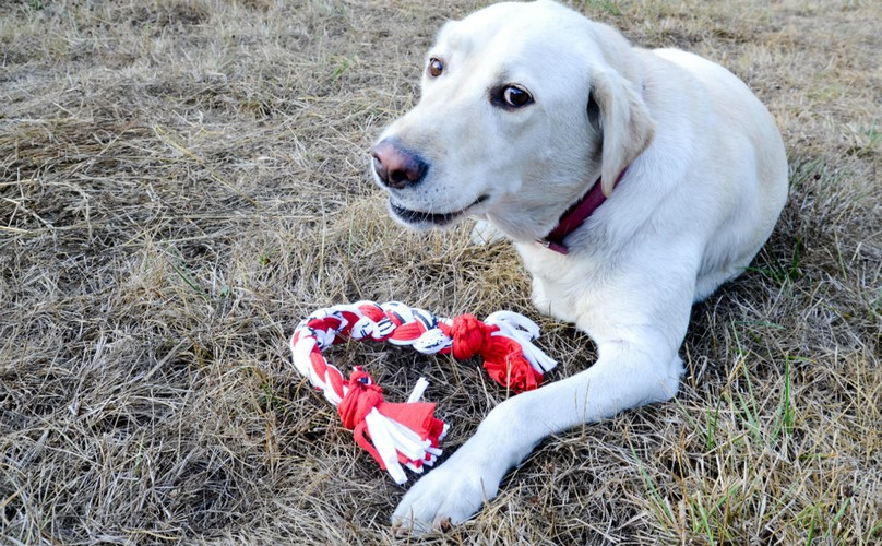 , DIY Toys for Your Dog