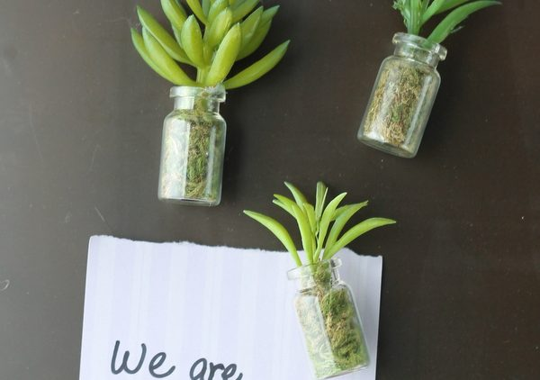 succulent-mason-jar-magnets-001