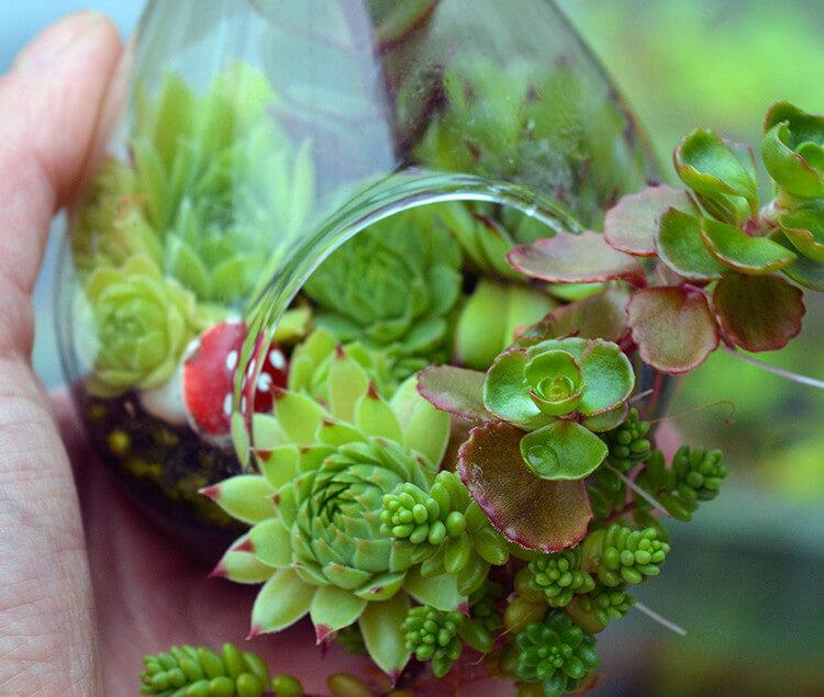 , DIY Decor Ideas using Succulents