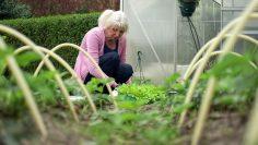 M&M_S14E12_Carson Arthur_The Best Low Maintenance Plants For Your Garden