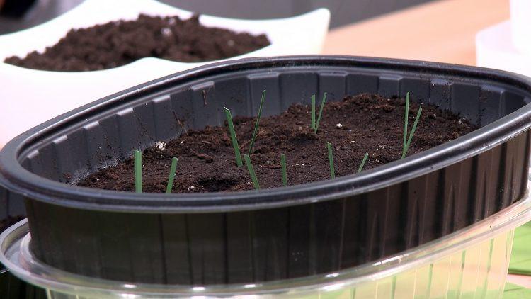 M&M_S16E09_Troy Barkman_DIY Greenhouse Alternatives