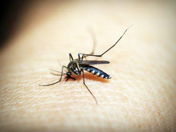 animal-antenna-biology-bite-169357(1)