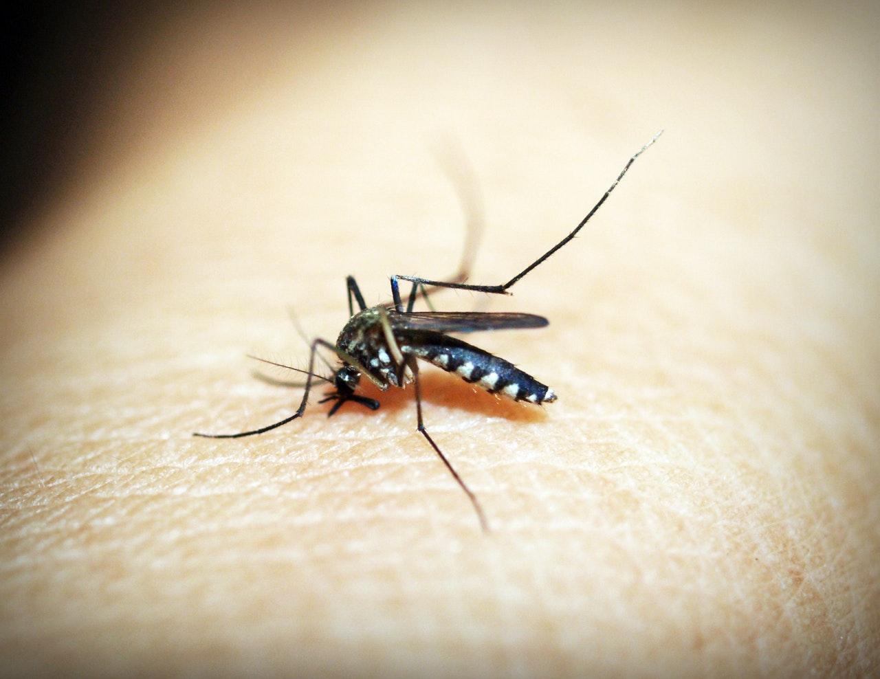 Mosquito Treatment, Professional Mosquito Treatment Benefits