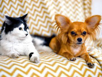 M&M_S23E05_Gary Braden_Pet Sitting Services