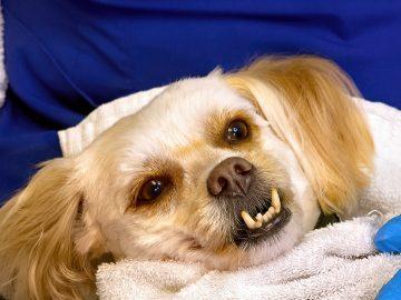 M&M_S24E13_Rhonda Hiebert_Pet Dental Cleaning