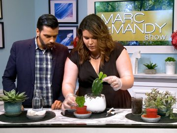 M&M_S25E07_How To Propegate House Plants 2